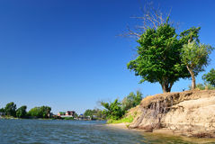 Tree by the river Stock Images
