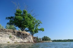 Tree by the river Royalty Free Stock Photography