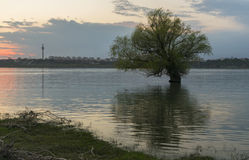 Tree in river on sunset background Royalty Free Stock Photography