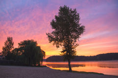 Tree at river in sunset. Iconic tree at river in sunset spring Royalty Free Stock Photography