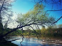 Tree. By the river royalty free stock images