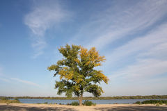 Tree on the riverbank Royalty Free Stock Photo