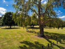 Tree in a riverside park. A large weeping treeadorns maicured lawns in a park beside the Waikato River in New Zealand`s heartland Royalty Free Stock Images