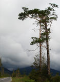 A Tree by the Road. In the High Tatras city, Tatranske Matliare willage (road to Kezmarske Zlaby willage). The East of High Tatras National Park Stock Photography