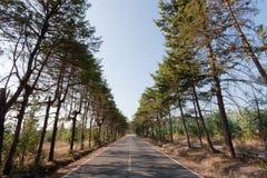 Tree Road Stock Photo