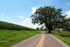 Tree by road. A tree by a rural road near a farm stock image