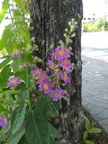 The tree beside road are flowering at the base of it. Tree  flowering  nature outdoor petal stock photo