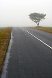 Tree and road in fog Royalty Free Stock Photo