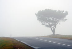 Tree and road in fog Royalty Free Stock Images