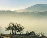 Tree by the road on foggy sunrise in mountain. Beautiful countryside scenery in late autumn Stock Images