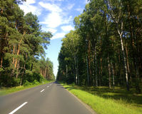 Forest Highway. A highway cutting through a Polish birch trees royalty free stock photo