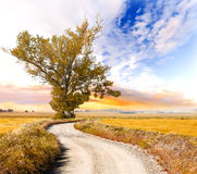 Tree and road landscape Royalty Free Stock Image