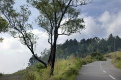 Tree , road leading towards lush green ponmudi hills and sky Stock Images