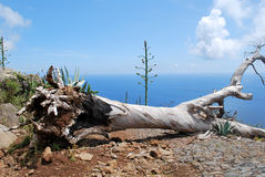 Tree on a road in Madeira Royalty Free Stock Photography