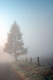 Tree on the road in the mist royalty free stock photo