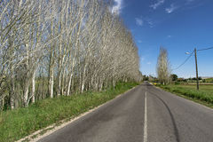 Tree road. The road of naked trees Stock Image