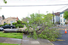 Tree in road after recent storms in Northern California Royalty Free Stock Photo