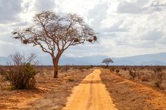 Tree by the road, red soil, hills in the far. Kenya Stock Photo