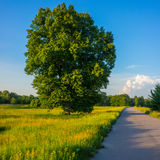 Tree beside the road Royalty Free Stock Photos