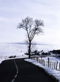 Tree and road in winter Royalty Free Stock Photography