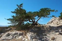 Tree on the rock Stock Photos