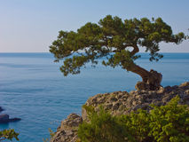The tree on the rock Royalty Free Stock Photography