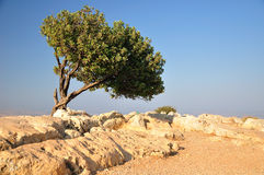 Tree on the rock. Stock Photo