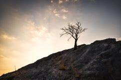 Tree on a rock Royalty Free Stock Photo