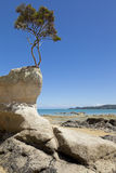 Tree on the rock Stock Photography