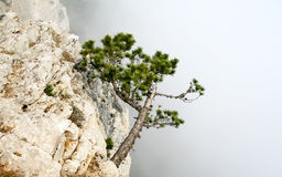 Tree on the Rock Stock Photo