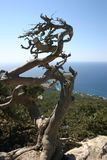 Tree on the rock. On the Rhodes island Royalty Free Stock Images