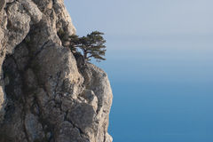 Tree on a rock. Lonely tree on a rock, a dark blue homogeneous background (the sea and the sky Stock Photography