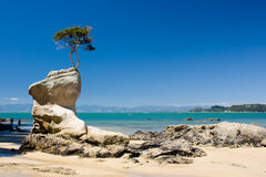 Tree on a rock at the beach. Remote beach in Abel Tasman National park, New Zealand royalty free stock photography