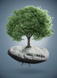 Tree on rock Royalty Free Stock Photo