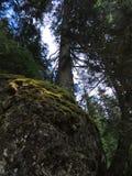 Tree On Rock Boulder Royalty Free Stock Image