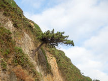 Tree on rock. Curious image with a tree living on the rocky hillside and overlooking the sea Stock Photos