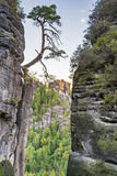 Tree at a rock in the Elbe Sandstone Mountains Stock Photo