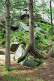 Tree on a rock Stock Photo