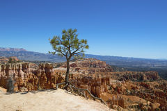 Tree and rock formations in Bryce Canyon National Park, Utah Royalty Free Stock Image