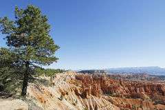 Tree and rock formations in Bryce Canyon National Park in Utah Stock Photos