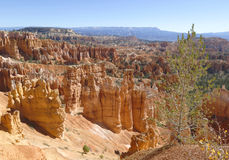 Tree and rock formations in Bryce Canyon National Park in Utah Royalty Free Stock Photo