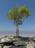 Tree on a rock Royalty Free Stock Image