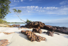 Tree on a Rock, Jervis Bay Stock Image