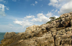 Tree and rock Stock Photography