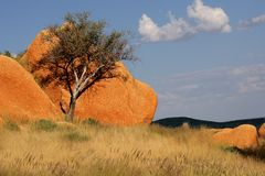 Tree and rock, Namibia Stock Photography