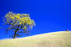 Tree and Rock on hillside in late spring Royalty Free Stock Images