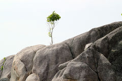 Tree on rock Stock Photography
