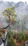 Tree on rock stock photos