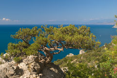 Tree on rock and sea. Juniper tree on rock against sea and blue sky Stock Image