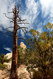 Tree, Rock & Sky. View of dead tree towering above canyon floor against clouded blue sky at Tent Rocks monument in New Mexico stock photography